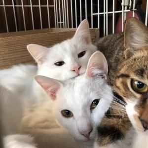 別室の猫ちゃんたちは・・・