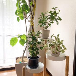 お部屋の緑化計画