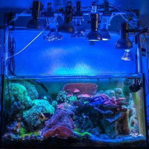 我が家の珊瑚礁 ディスクコーラル繁殖しすぎ!