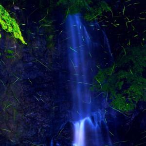 箕面の滝と蛍