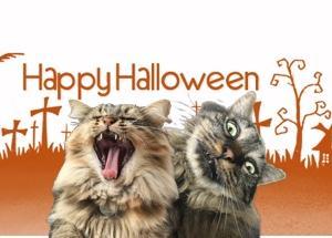 Happy Halloween...♪