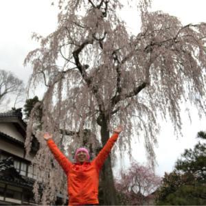 喜多家の桜ラン