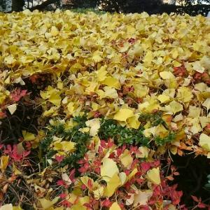 黄金色の葉と遊ぶ子どもたち!