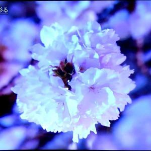 テレビでお花見! 花に力をもらう