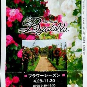 河津バガテル公園のバラはどうなっているだろう?