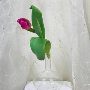 和の花しつらえ チューリップとユリ 寒さに負けないで!