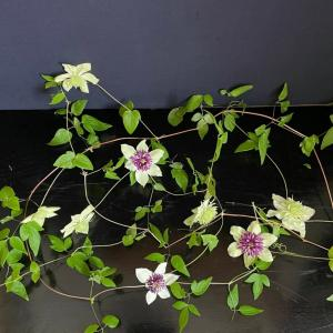 和の花しつらえ つる物の花 鉄線と昼顔