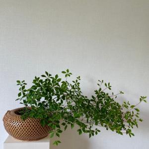 和の花しつらえ 翠を生ける ドウダンツツジと青紅葉
