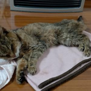 22歳の愛猫