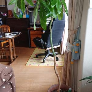 観葉植物の鉢に生えたキノコ…赤帽札幌シェルパ