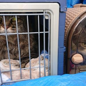 猫ちゃんのペットタクシー…赤帽札幌シェルパ