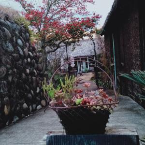 nuuさんの着物教室、二月は撮影の着付けから。