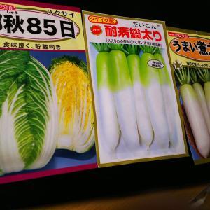 冬野菜の準備