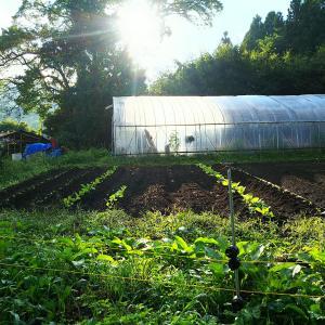 練り床で苗作りを学ぶ
