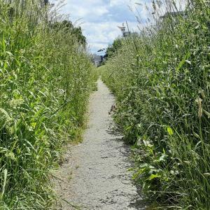 河原をお散歩