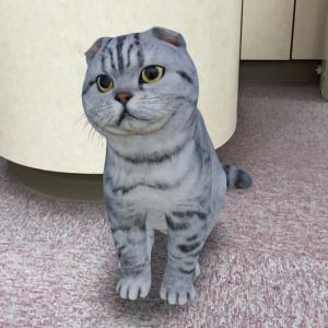 触れない猫
