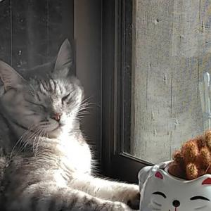 ◆猫の写真◆
