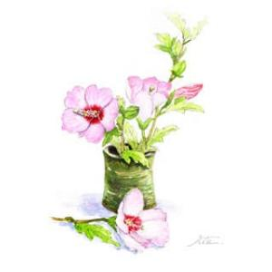 ◆ 芙蓉の花 ◆