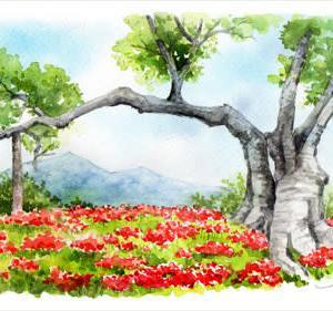 ◆ 彼岸花と筑波山 ◆