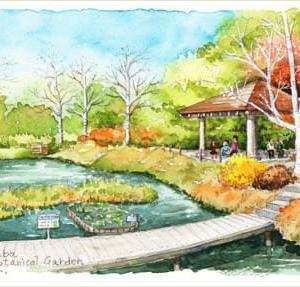 ◆ 筑波実験植物園の紅葉 ◆