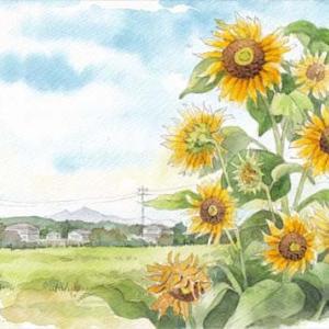 ◆ 筑波山とヒマワリ ◆