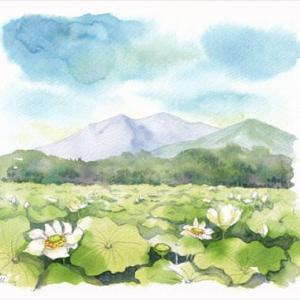 ◆蓮田と筑波山・古来◆