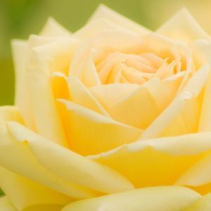 完結89歳元音楽教師の霊さん!最期に人は花となるのよ!~今日の霊さんとの会話2/13の場合~
