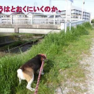 夏用散歩道