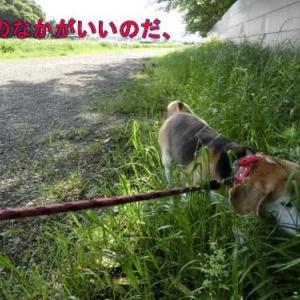 夏用散歩道でも草の中が好き
