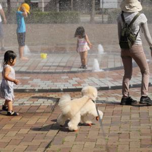 公園で遊べない理由