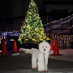 クリスマスったらクリスマス