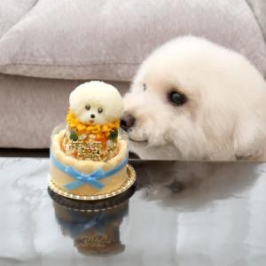11歳の犬用誕生日ケーキ