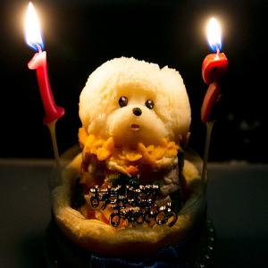 12歳の犬用誕生日ケーキ