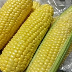トウモロコシは作ってません!と言い続けた結果。
