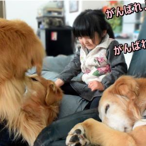 将来の「犬使い」さん? U^ェ^U 💕