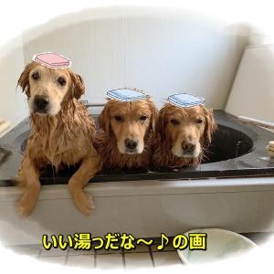 お風呂の日だじぇ♪ ∪o・ェ・o∪💕