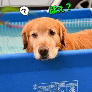 プールでお昼寝でちか?🐶