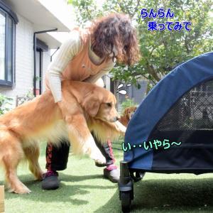 「大型犬用カート」でフェリー旅行のはずだった・・🐶