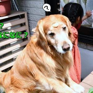 半額モデル犬🐶