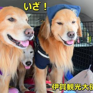 「伊賀観光大使犬」に任命されたのら♪