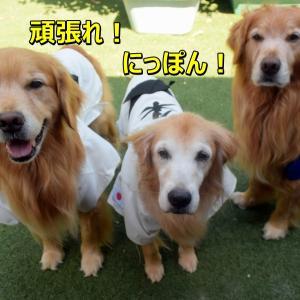 東京オリンピック「柔道ワンワン応援団」でち