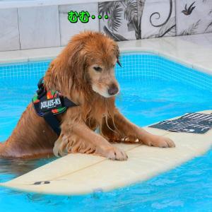 サーフボードに挑戦するワンコ達💕