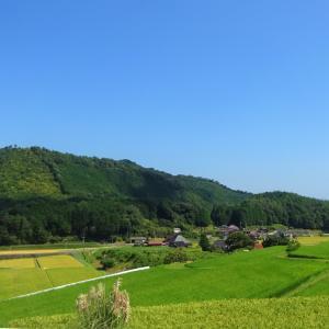 県内の田んぼ風景