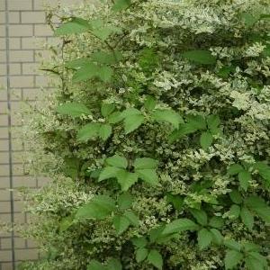 職場花壇の様子