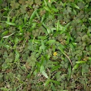 除草剤 と ナメクジ駆除剤