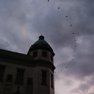 ドーム屋根にはアブラコウモリが似合う