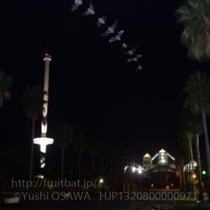 瀬戸大橋記念公園のアブラコウモリ