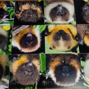 江戸川区立東部図書館で写真展「哺乳類が空を飛んだ理由 大沢夕志&大沢啓子のコウモリの世界」
