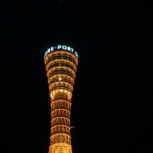 ポートタワーのアブラコウモリと、消火担当のキクガシラコウモリ