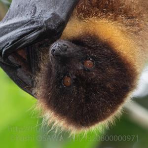 写真展「哺乳類が空を飛んだ理由 大沢夕志&大沢啓子のコウモリの世界」終わりました